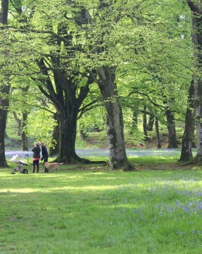 Best Bluebell Woods Devon and Dorset