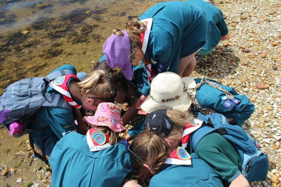 Brownsea Island Scouts