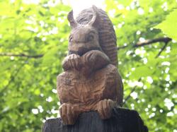 Brownsea Island squirrel