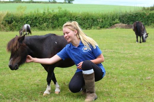 Summer Fairs Munchkins Shetland Ponies