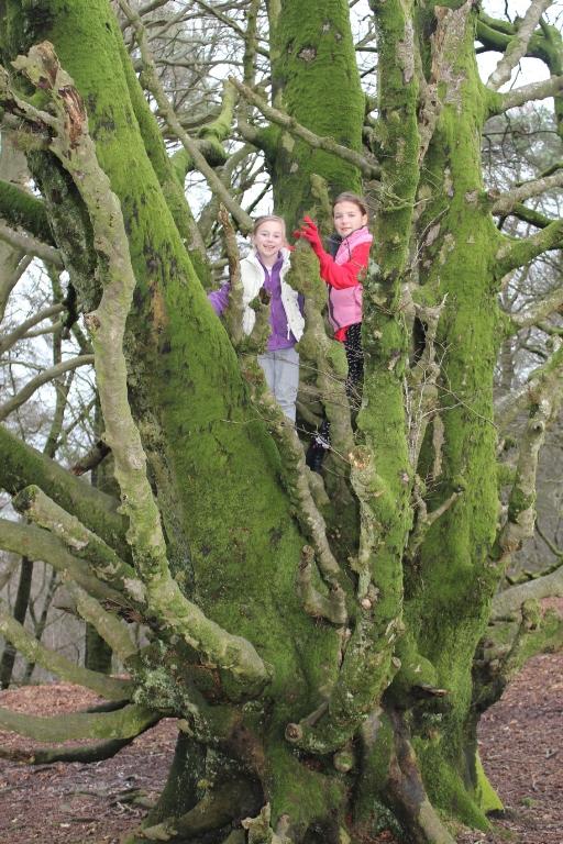 Lambert's Castle in Dorset climbing old trees