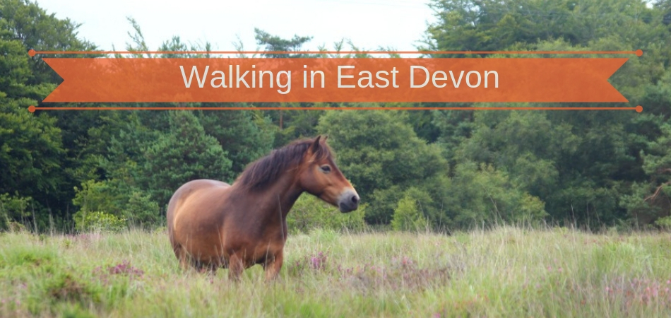 Trinity Hill Nature Reserve walking and Exmoor ponies in East Devon