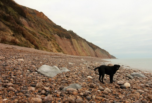 Beach walks East Devon winter family dog friendly Axmouth