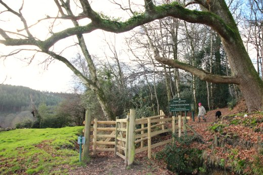 Woodland Countryside Walks East Devon Offwell Woods entrance