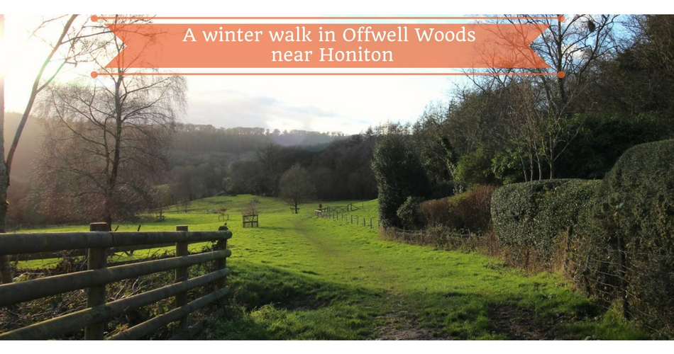 A Woodland Countryside Walk in Offwell Woods