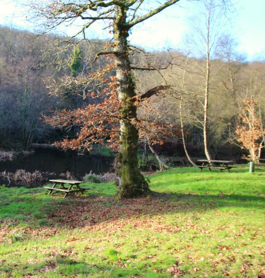 Woodland Countryside Walks East Devon Offwell Woods pond benches