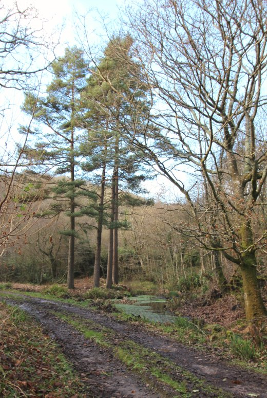 Woodland Countryside Walks East Devon Offwell Woods ponds