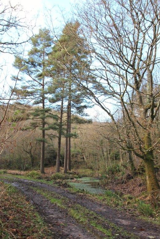 Woodland Countryside Walks East Devon Offwell Woods ponds