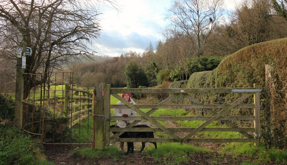 Woodland Countryside Walks East Devon Offwell Woods start