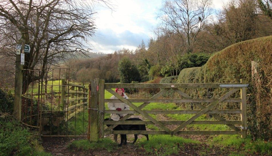 Woodland Countryside Walks East Devon Offwell Woods start