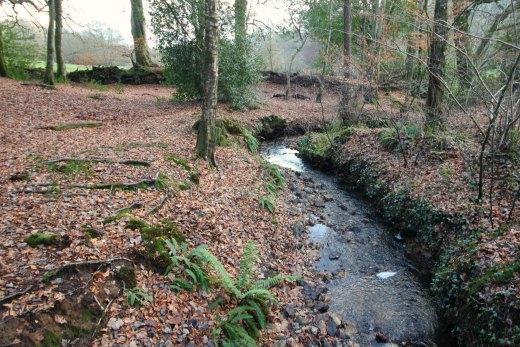 Woodland Countryside Walks East Devon Offwell Woods streams