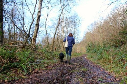 Woodland Countryside Walks East Devon Offwell Woods track