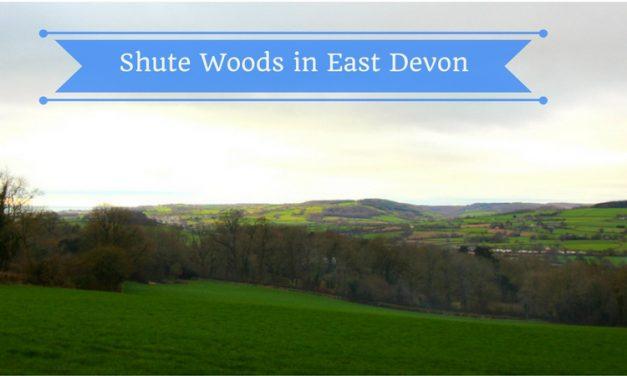 Shute Woods East Devon