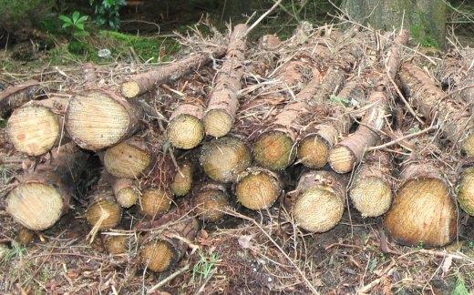 Shute Woods East Devon logs