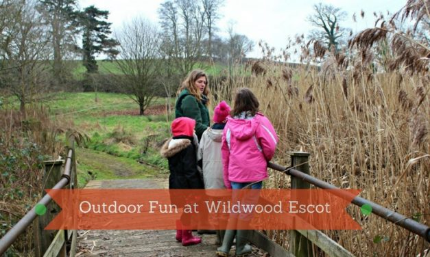 Wildwood Escot Family Day Out Devon