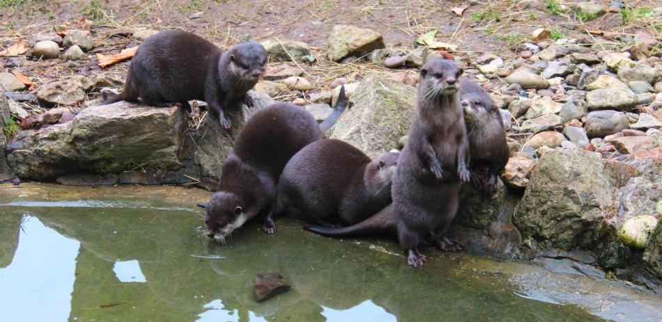 Wildwood Escot Family Day Out Devon Otter feeding time