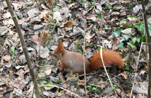 Wildwood Escot Family Day Out Devon red squirrel