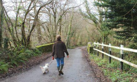 A Wonderful Walk  – Roundball Wood in Honiton, East Devon