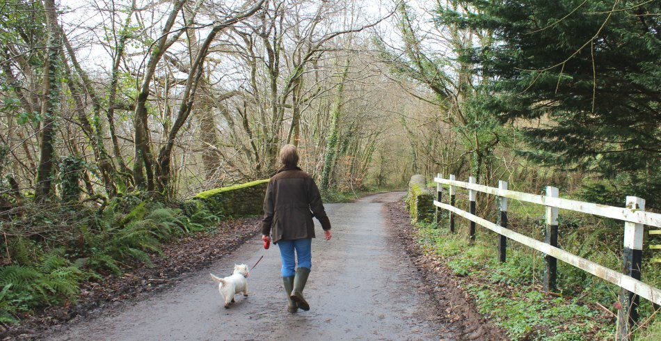 A Wonderful Walk  – Roundball Wood in Honiton, East Devon