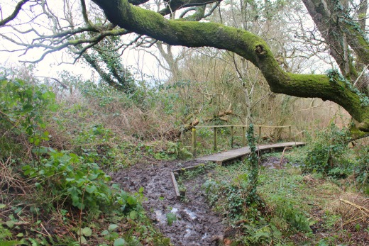 Roundball Wood Honiton East Devon Family Dog Friendly Walk woodland walk