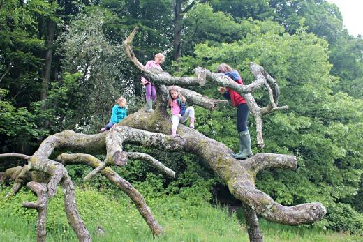 Best Bluebell Woods Devon Dorset Somerset Wayford Woods