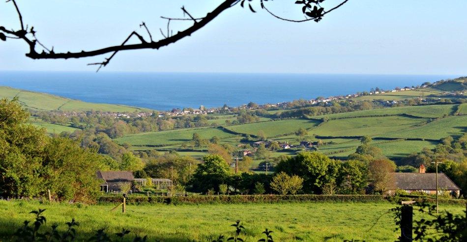 Best Bluebell woods in Devon Dorset Charmouth view