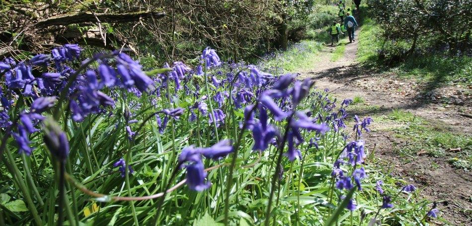 Best bluebell woods Devon Dorset Somerset Holyford Woods