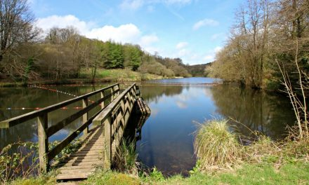 Otterhead Lakes Nature Reserve in the Blackdown Hills