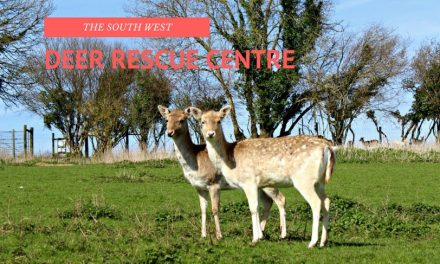 South West Deer Rescue Centre
