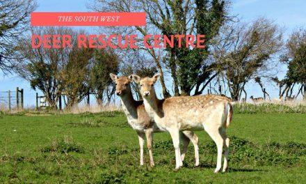 South West Deer Rescue Centre