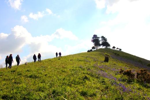 Colmer's Hill Bridport Walk