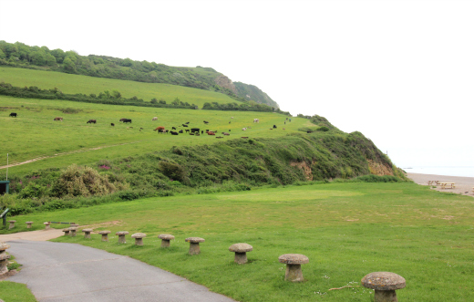 South West Coast Path Beer to Branscombe Walk Sea Shanty view