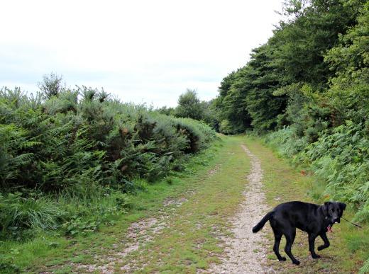 Harpford Common dog walk