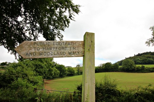 Harpford Common and Fire Beacon Hill East Devon Way walk
