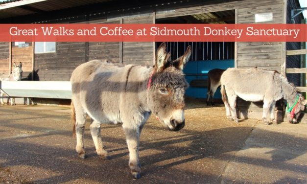 Walks Around Sidmouth Donkey Sanctuary