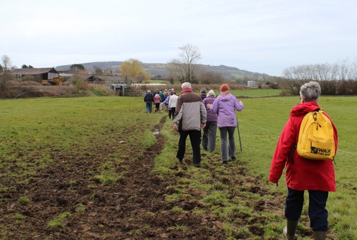 Walking for Health Axminster