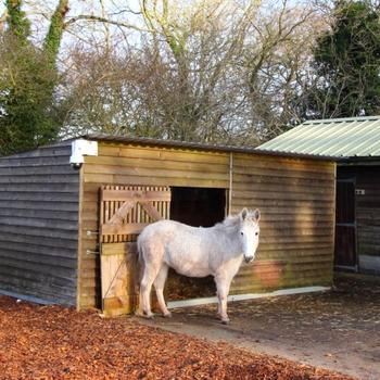 Walks Around Sidmouth Donkey Sanctuary South West Coast Path - Millie