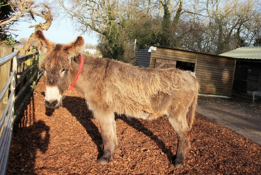 What's On Half Term Events Donkey Sanctuary, near Sidmouth in East Devon.