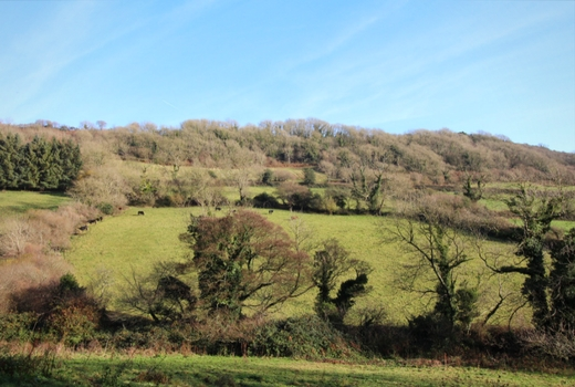 Walks Around Sidmouth Donkey Sanctuary South West Coast Path - valley view