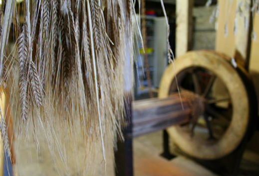 Town Mill Lyme Regis wheat hanging