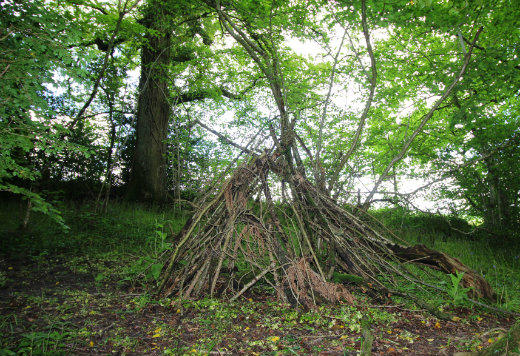 Combe Woods woodland walk near Honiton in Devon build a den