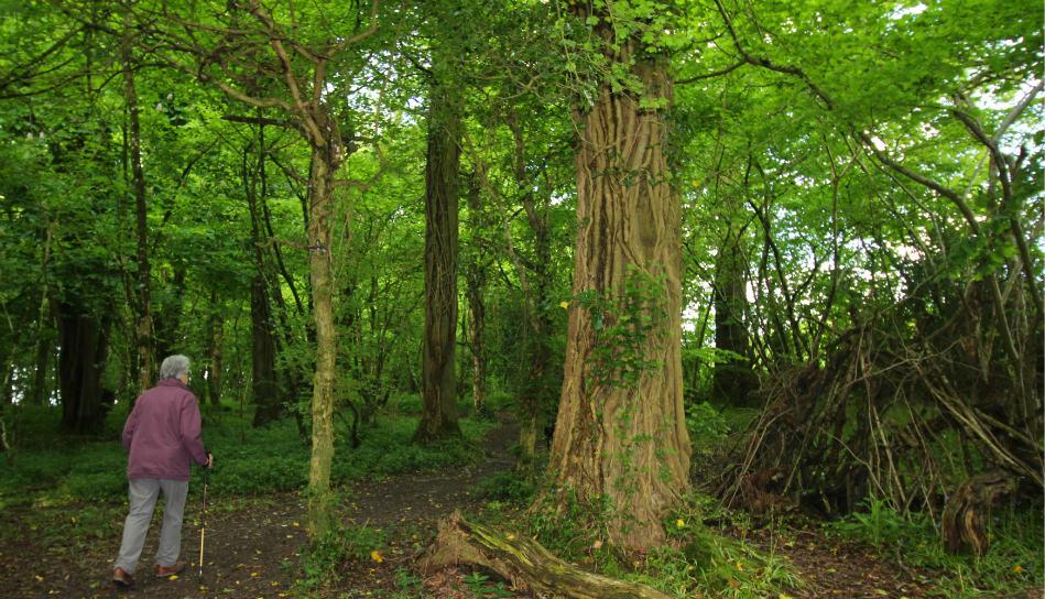 Combe Woods woodland walk near Honiton in Devon short walk