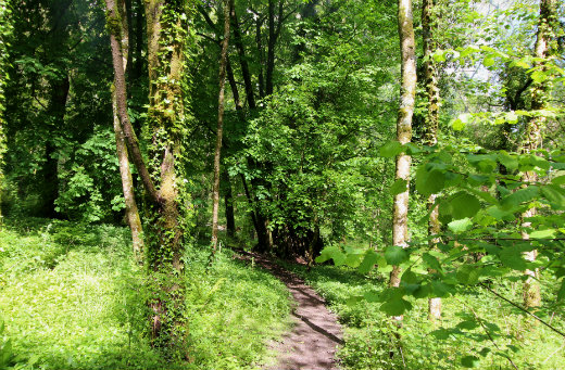 Combe Woods woodland walk near Honiton in Devon path