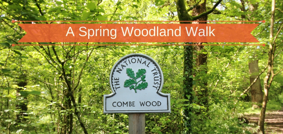 Combe Woods, a woodland walk in East Devon