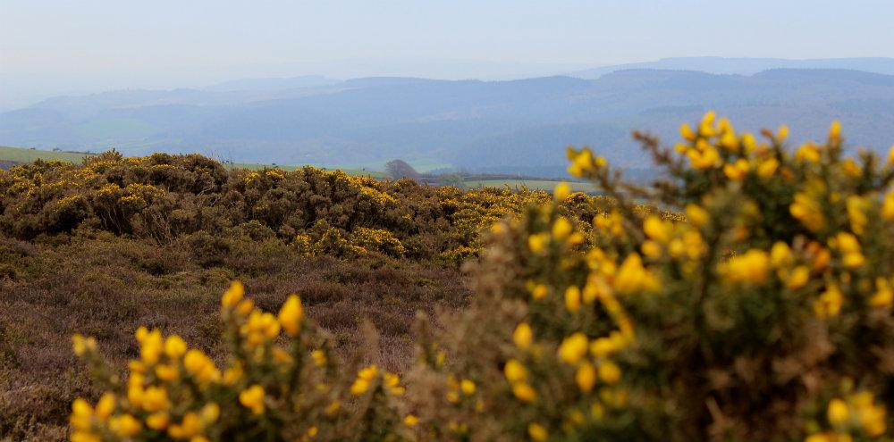 Outdoor adventure Exmoor view with gorse