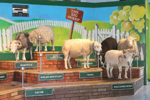 The Big Sheep Attraction sheep breed parade