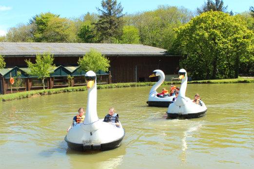 The Big Sheep Attraction swan pedalos