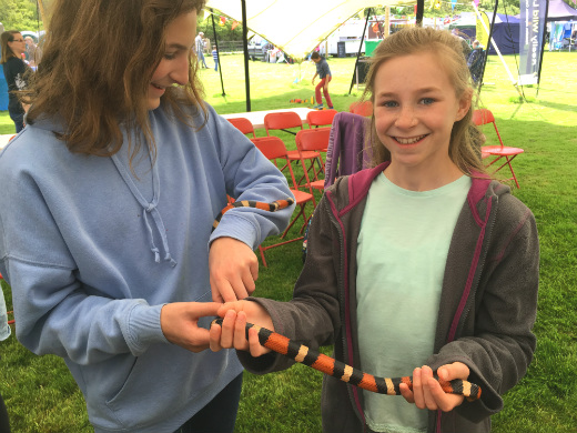 Great Devon Music Festivals - Pigstock animal magic