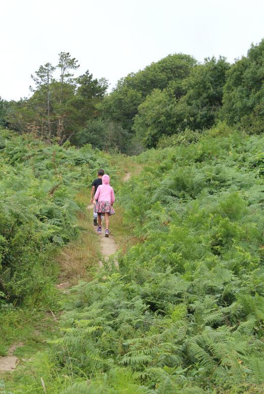 A short walk in Lyme Regis Coast heath walk
