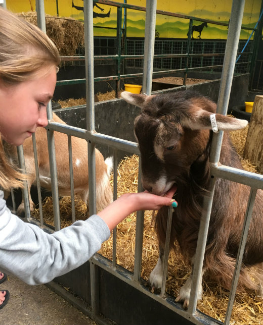 Family day out in Devon at Crealy Adventure Park girls feeding goats